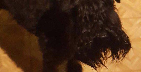 @politiMHPD:  Svolvær – Hittet hund  …